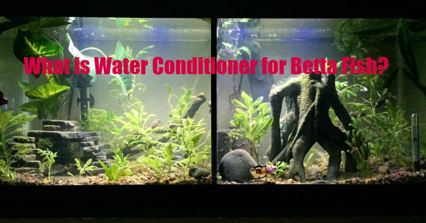 What is Water Conditioner for Betta Fish?