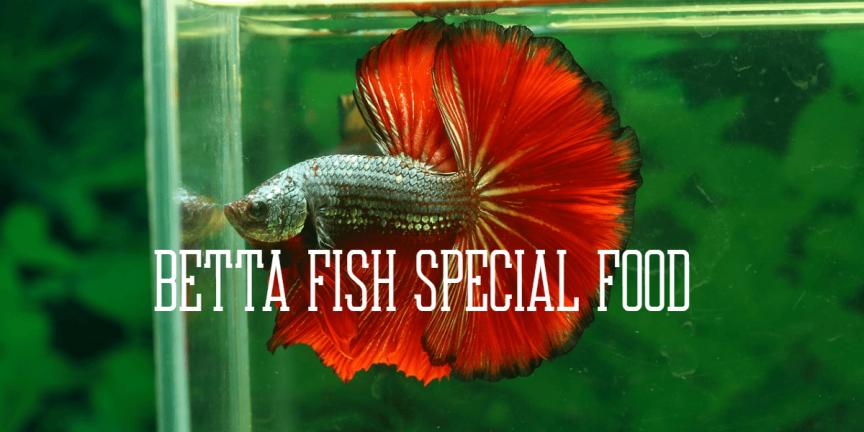 BETTA FISH SPECIAL FOOD
