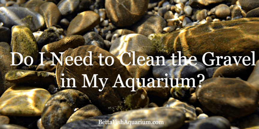 Do I Need to Clean the Gravel in My Aquarium