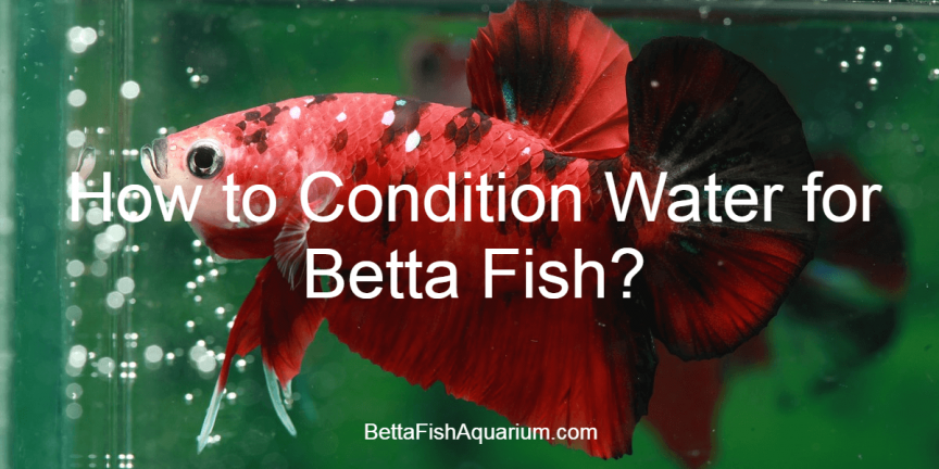 How to Condition Water for Betta Fish