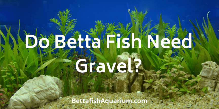 Do Betta Fish Need Gravel